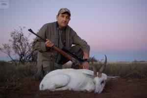 springbok Blanco Sr Corujo