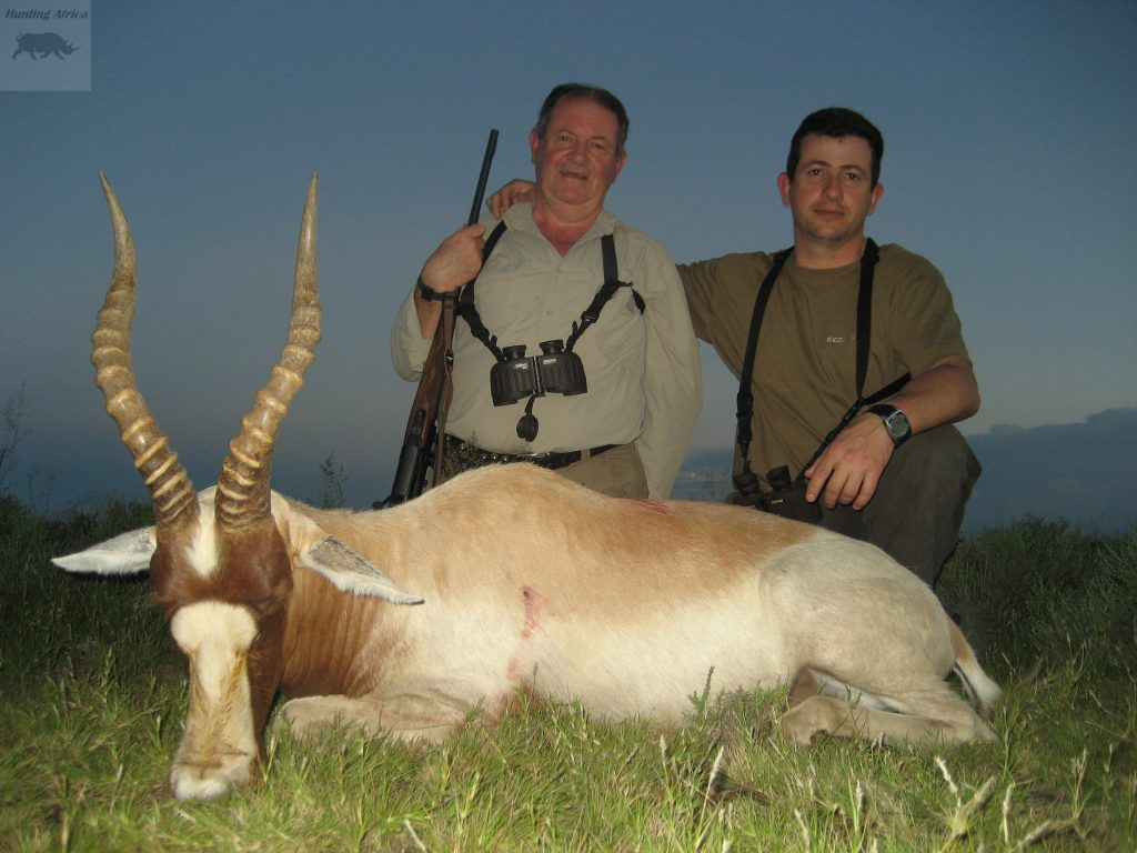 Yellow Blesbok