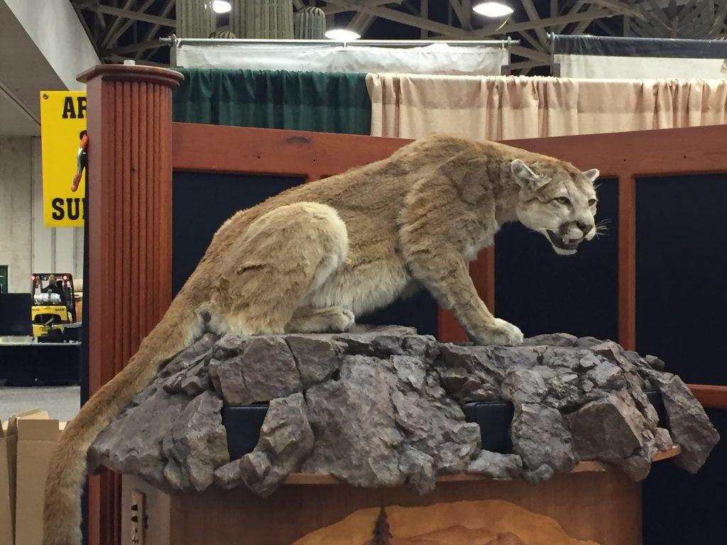 mountail lion